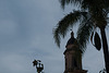 steeple with palm tree