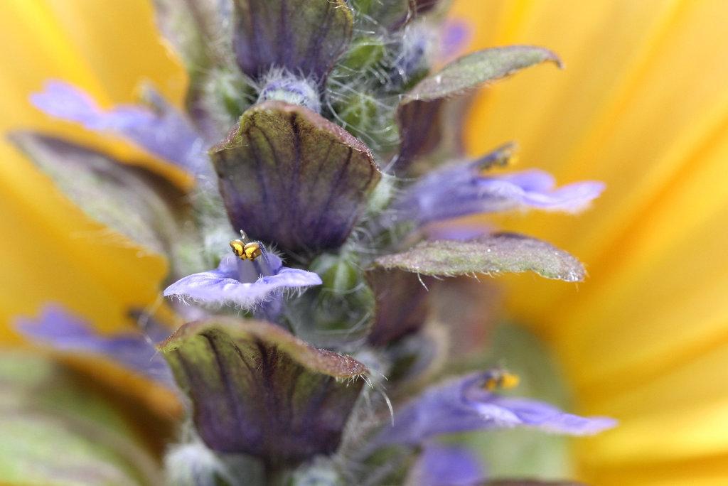 Une fleur par jour.... - Page 2 7909917.a5fcc7af.1024