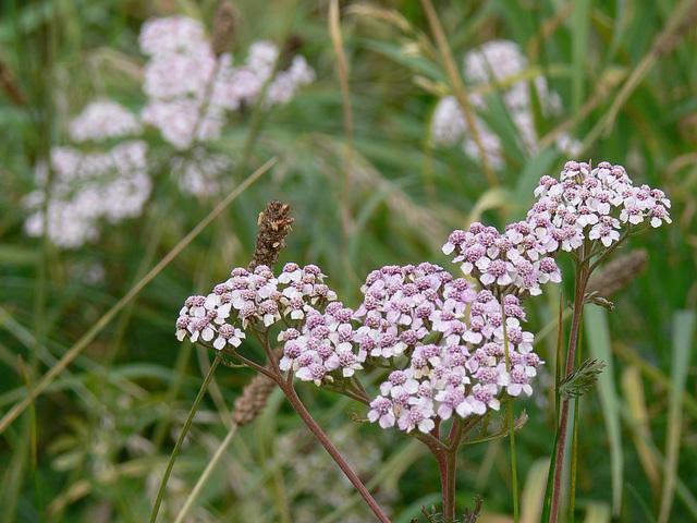 Flora und Fauna am Münchshofener Berg