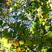 Herbstlicht im Schwarzerberg