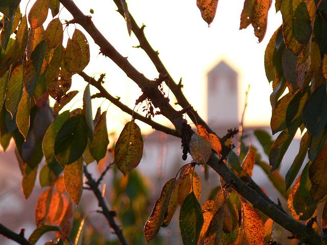 Herbstblätter im Sonnenlicht und St. Barbara