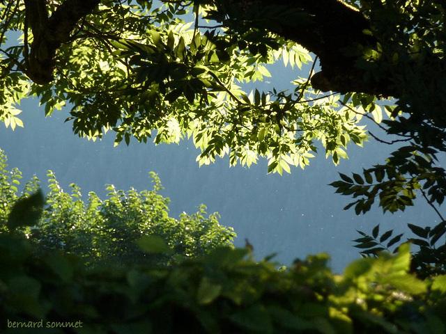 A l'ombre des frênes