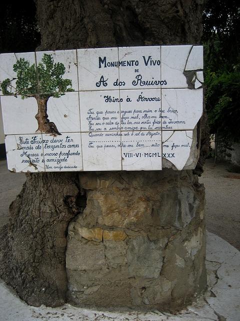 A-dos-Ruivos, old ash tree (2)