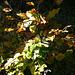 Goldener Oktober im Schwarzer Berg