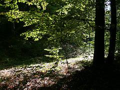 Herbst im Schwarzerberg