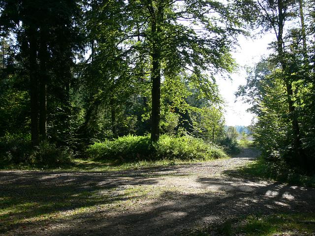 Weggabelung am Schwarzer Berg