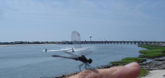New-Jersey. USA - 20 juilet 2010 - Recadrage