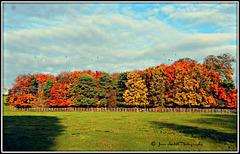 Shades of autumn 2008