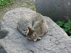Cat in Catania