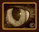'Eye of the Cat' ..