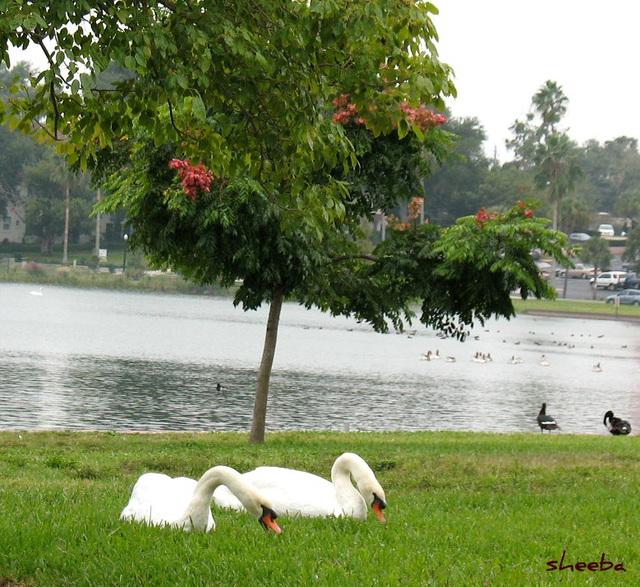 Lazy lake day...