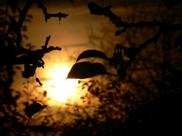 herbstliche Abendsonne