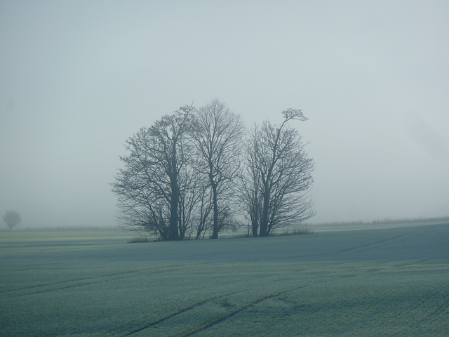 A clump of trees in the mist