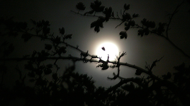 Die Nacht versinkt in den Tag
