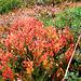 Herbst in den Bergen -