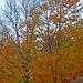 J'ai déjà perdu des feuilles !