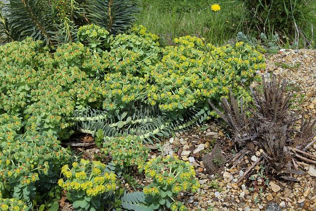 les plantes toxiques au jardin et aux alentours page 3 au jardin forum de jardinage. Black Bedroom Furniture Sets. Home Design Ideas