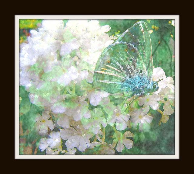 un papillon amoureux d'une fleur
