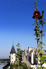 Montsoreau - Val de Loire