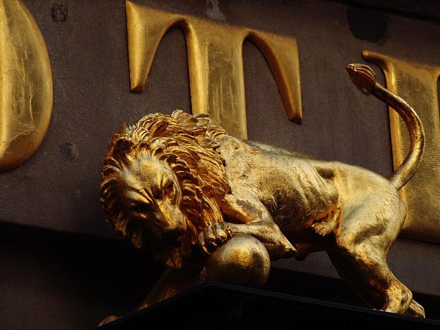 Der Löwe und sein Ball