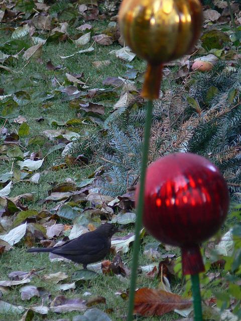 kleiner Gast im Garten