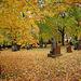 cimetière canadien