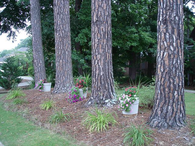 Jardin aux 4 arbres /4 trees garden