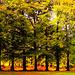 The Beginning of Autumn...