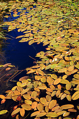 Floating golden