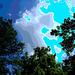 Arbre, ciel et nuages /  Sky, clouds and trees - Ohio. USA - 25 juin 2010 - Postérisation