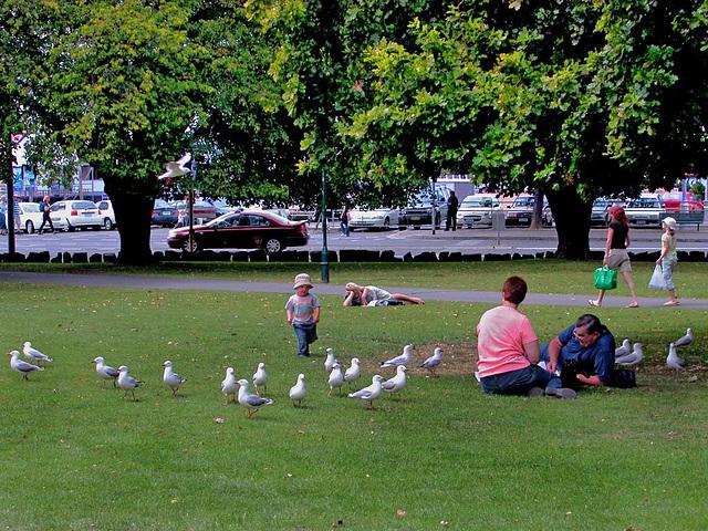 In St Davids Park in Hobart