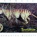Tasmanian Tiger also known as Tassi Tiger