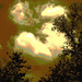 Arbres, ciel et nuages / Sky, clouds and trees - Ohio. USA. 25 juin 2010 - Sepia postérisé