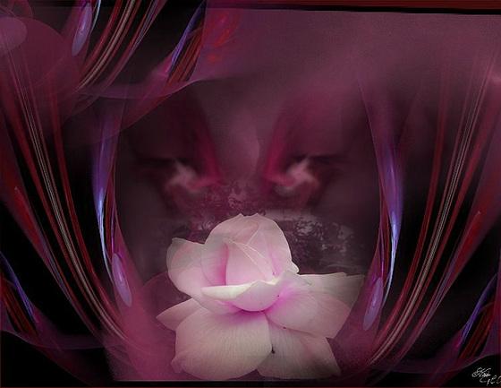 Rose Kris Geo rose