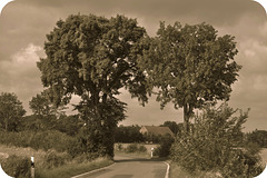 auf der Landstraße / on the country road