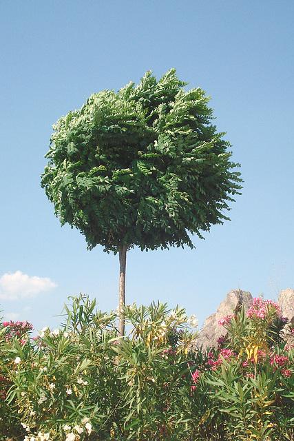 L'arbre joyeux