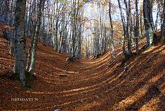 Les feuilles tapissent le sol