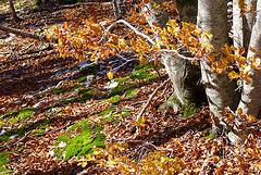 Couleurs de sous bois en automne