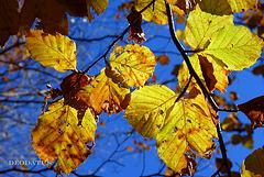 Vu par dessous les feuilles