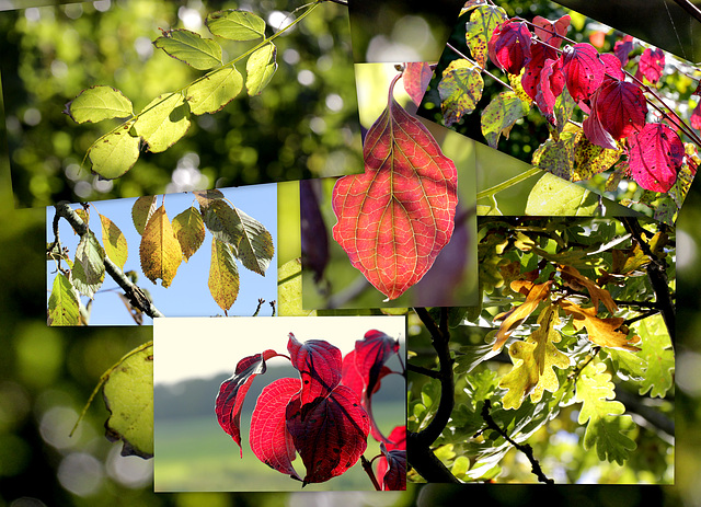 Octobre 2010 tons d'automne
