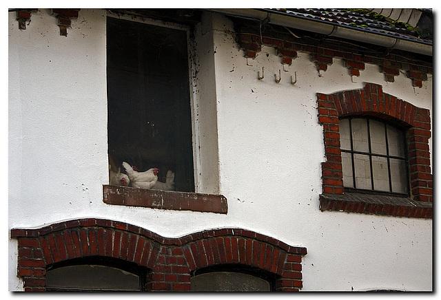 """""""Hühnerfenster"""" im Obergeschoss"""