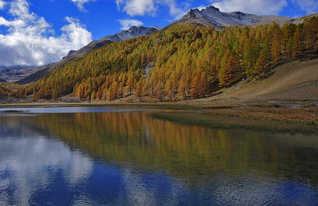 La forêt se reflète dans le lac des Sagnes.