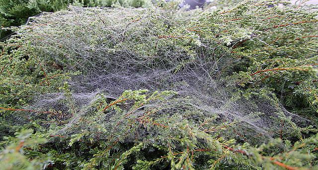 20100929 8422Waw Spinnwebe