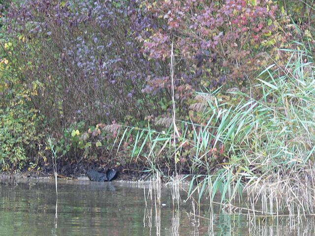 Herbsttage am Starnberger See