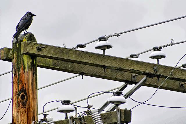 A Modern Day Totem Pole – Vancouver, B.C.