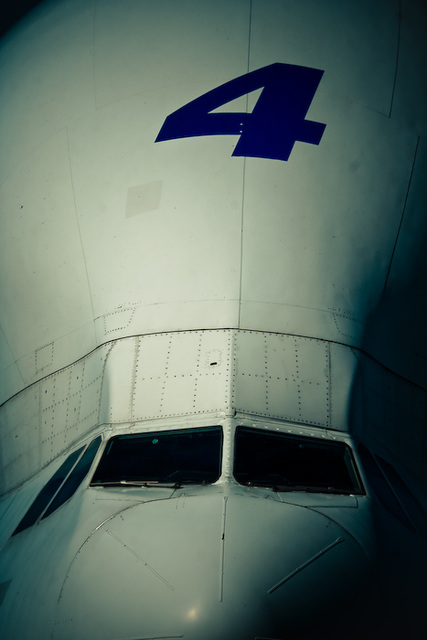 Beluga 02