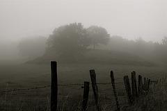 ... dans la brume