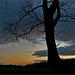 l'arbre et la nuit