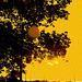 Lever de soleil / Sunrise -  Columbus, Ohio. 25 juin 2010- Sepia postérisé