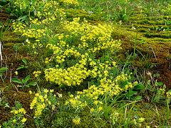 gelbgrüner Teppich